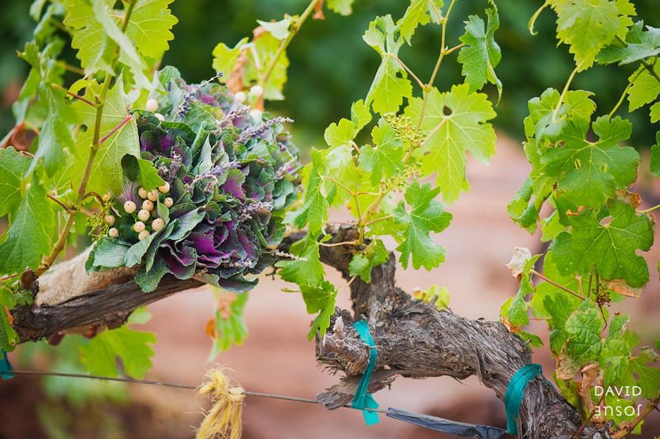 baja-vineyards-valle-de-guadalupe