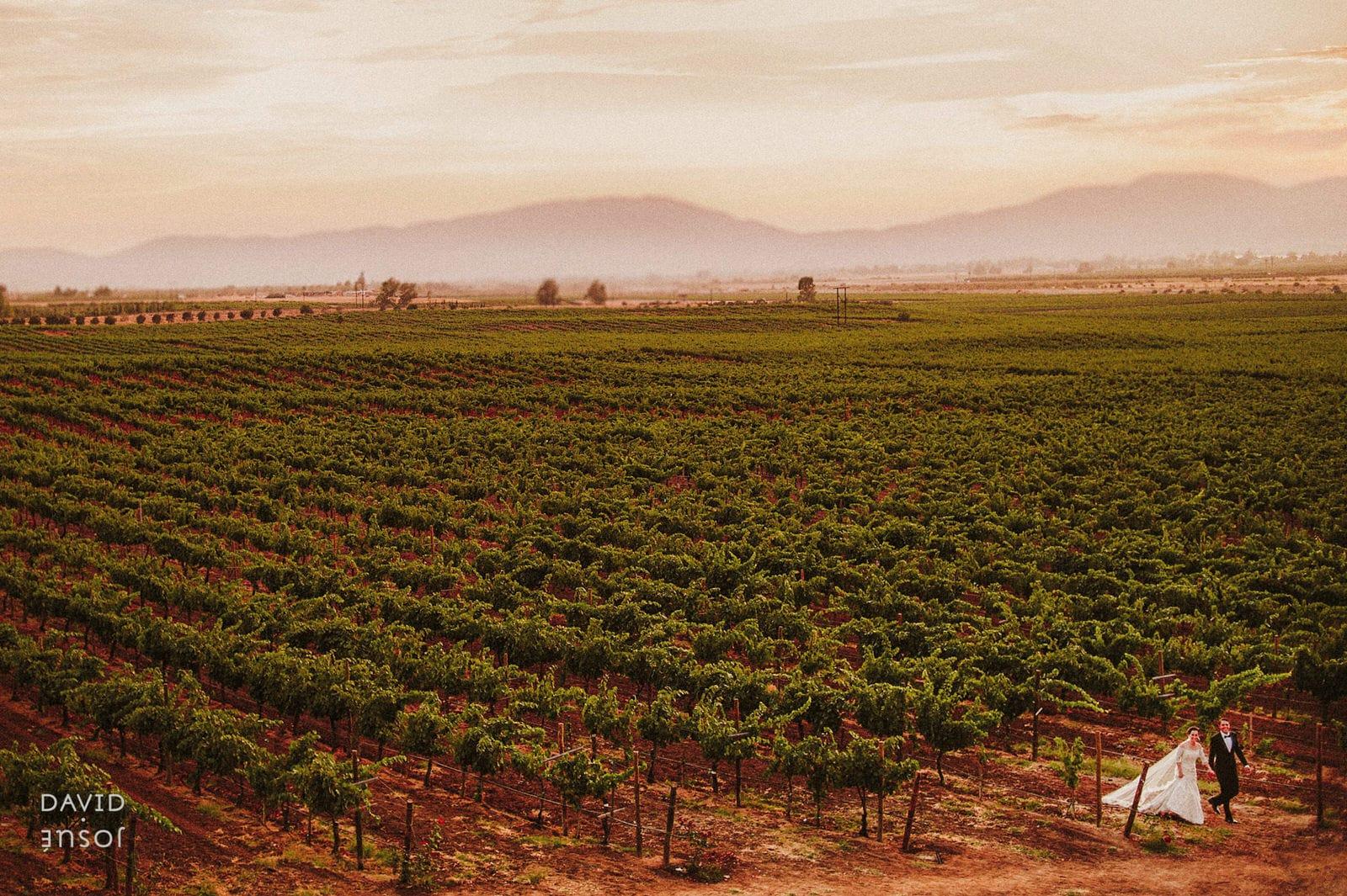Bride and Groom at Ensenada Baja California Museo del Vino vineyards
